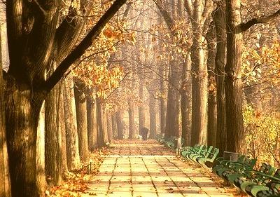 Autumn Park, Bucharest, Romania