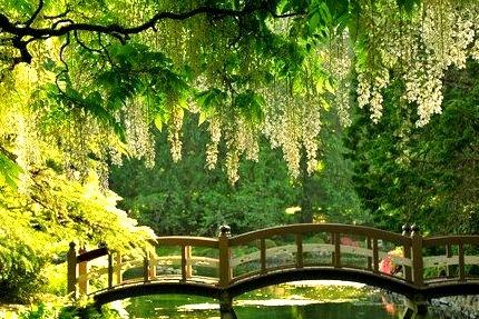 Japanese Garden, Victoria Island, Canada