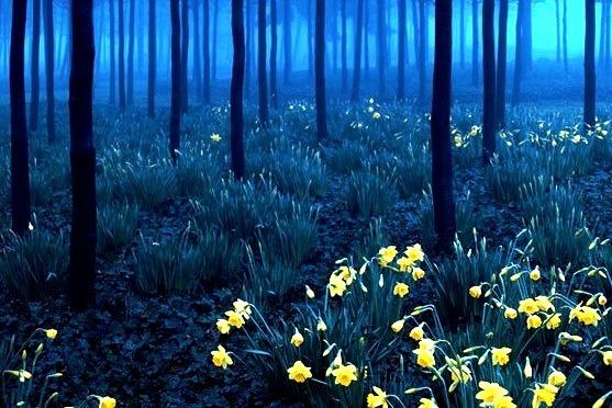 Blue Forest, North Greenwich, England
